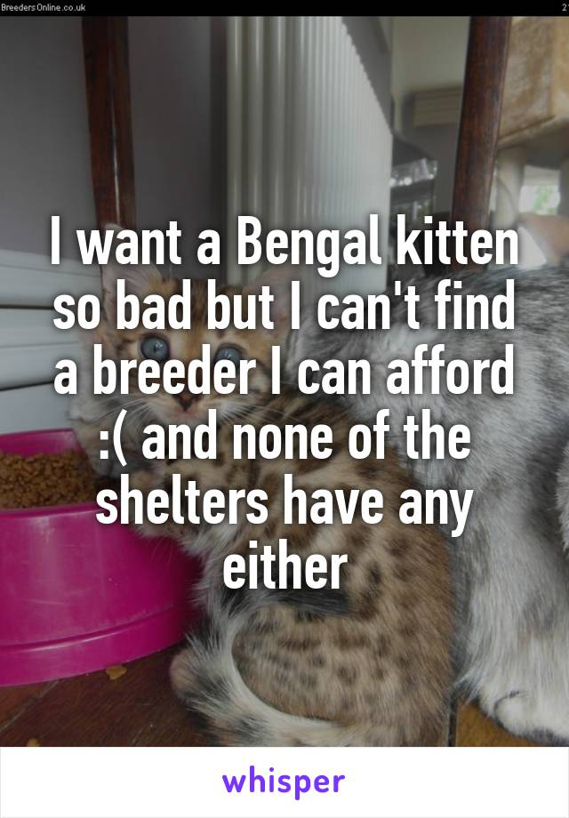 I want a Bengal kitten so bad but I can't find a breeder I can afford :( and none of the shelters have any either