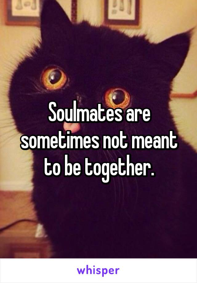 To Meant Be Are Mates Together Soul