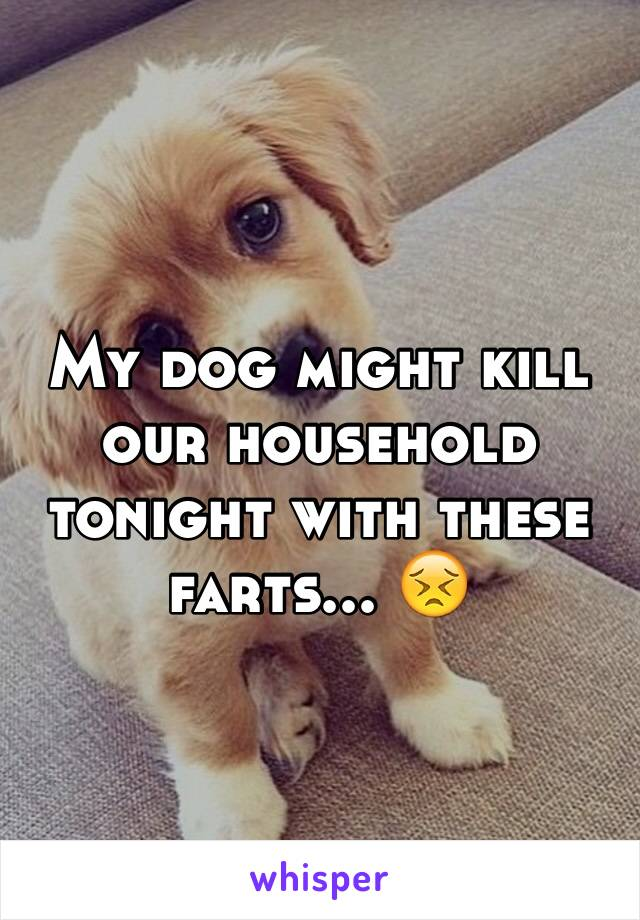 My dog might kill our household tonight with these farts... 😣