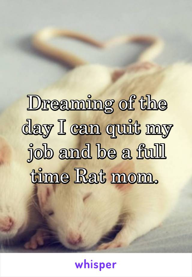 Dreaming of the day I can quit my job and be a full time Rat mom.