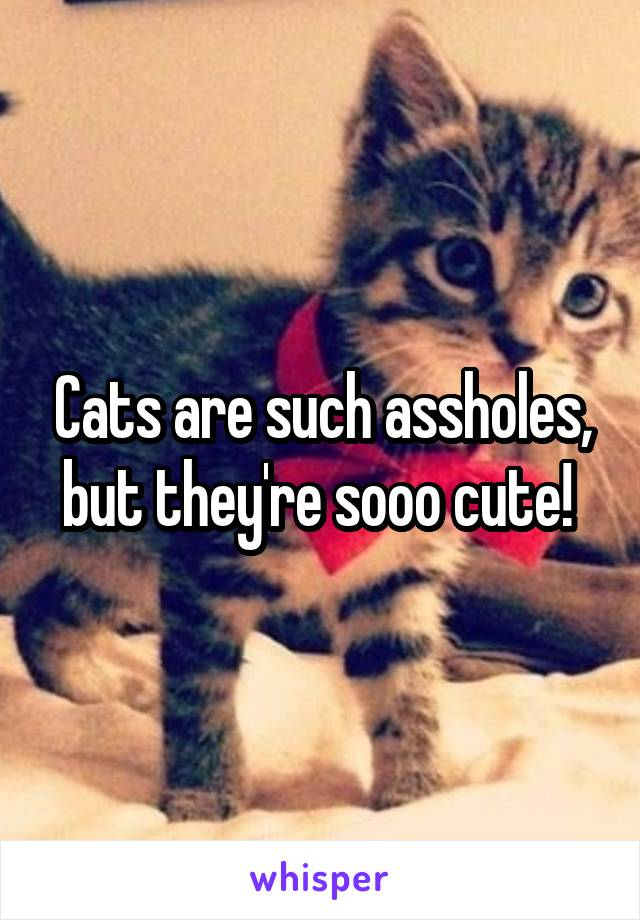 Cats are such assholes, but they're sooo cute!