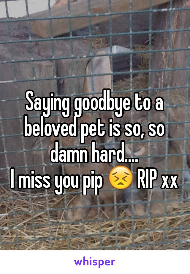 Saying goodbye to a beloved pet is so, so damn hard.... I miss you pip 😣 RIP xx