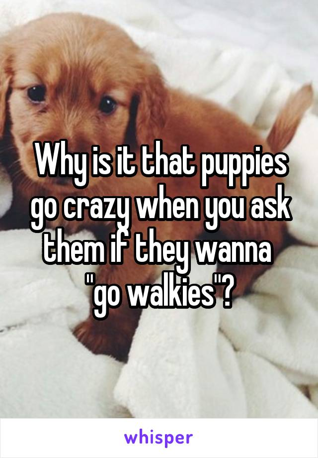 """Why is it that puppies go crazy when you ask them if they wanna  """"go walkies""""?"""