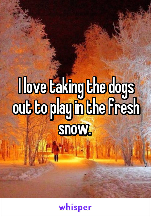 I love taking the dogs out to play in the fresh snow.