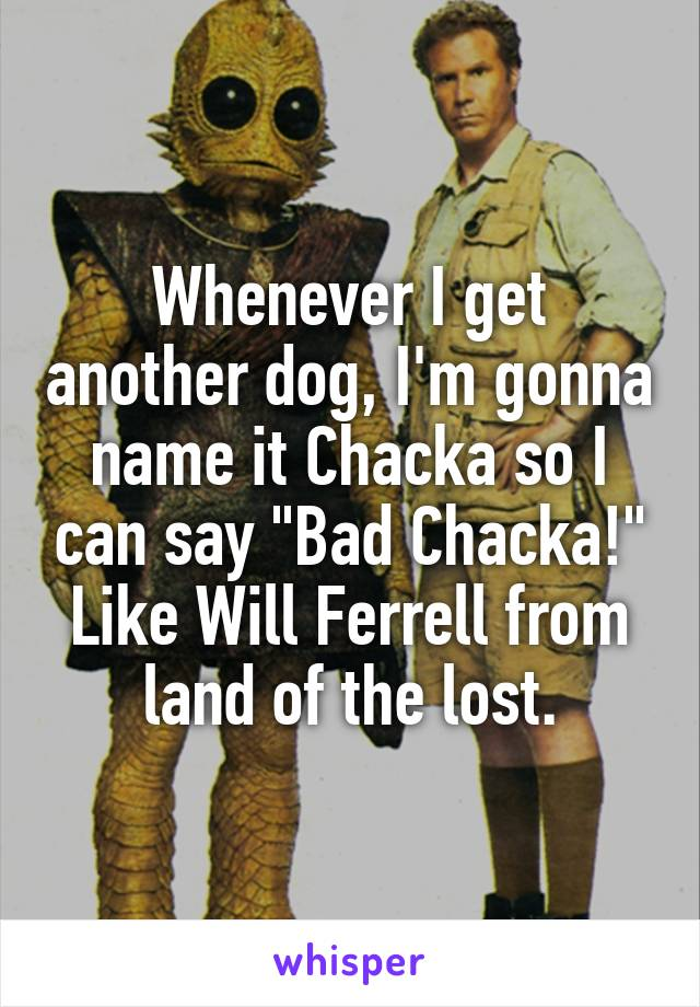 """Whenever I get another dog, I'm gonna name it Chacka so I can say """"Bad Chacka!"""" Like Will Ferrell from land of the lost."""