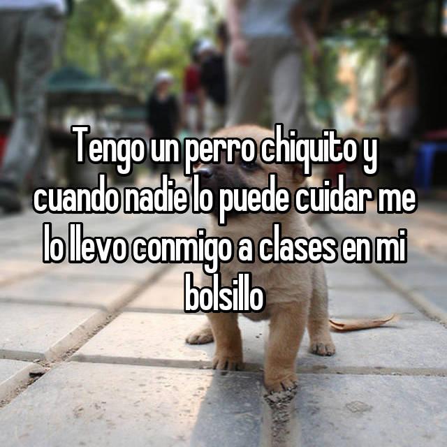Tengo un perro chiquito y cuando nadie lo puede cuidar me lo llevo conmigo a clases en mi bolsillo