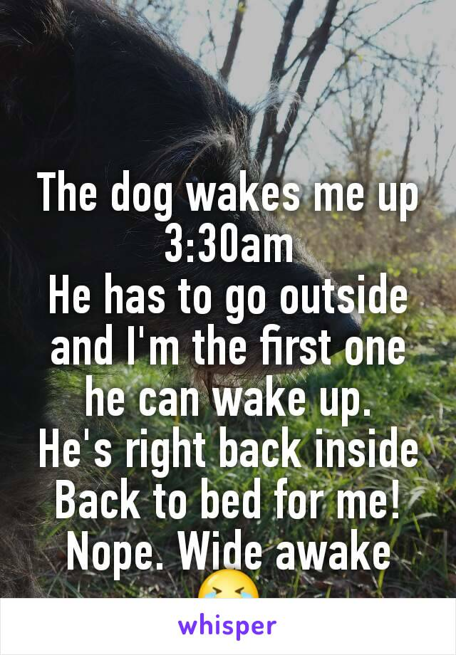 The dog wakes me up 3:30am He has to go outside and I'm the first one he can wake up. He's right back inside Back to bed for me! Nope. Wide awake 😭