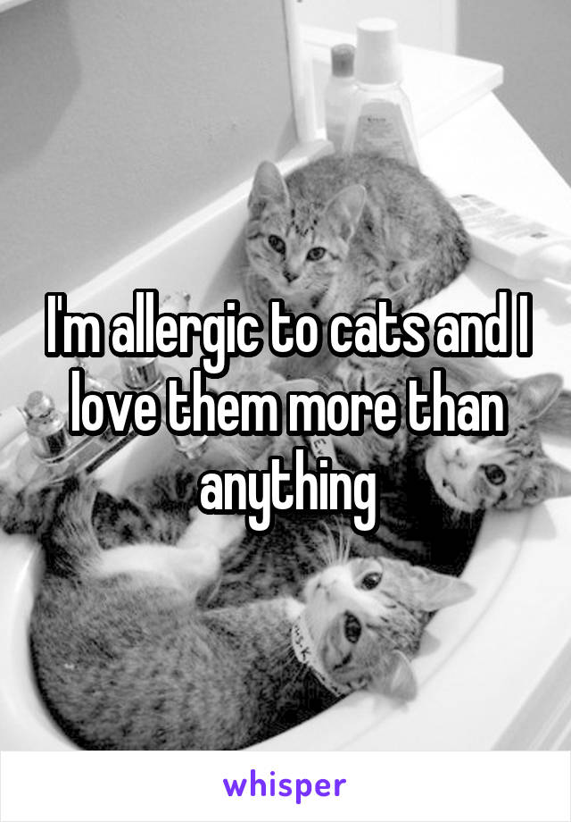 I'm allergic to cats and I love them more than anything