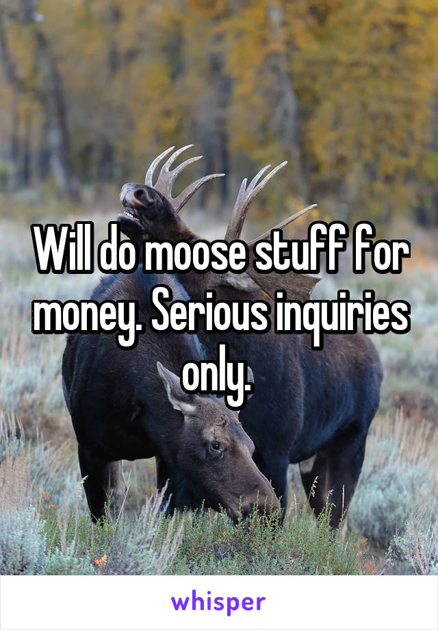 Will do moose stuff for money. Serious inquiries only.