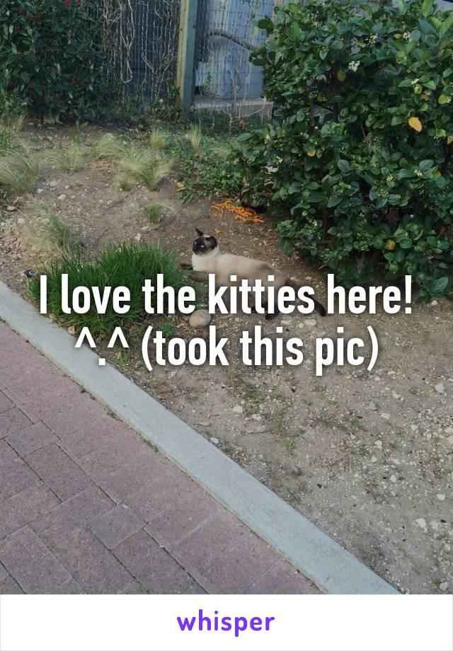 I love the kitties here! ^.^ (took this pic)