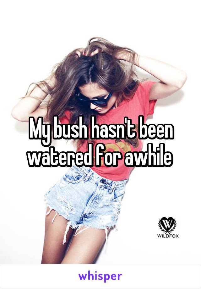 My bush hasn't been watered for awhile