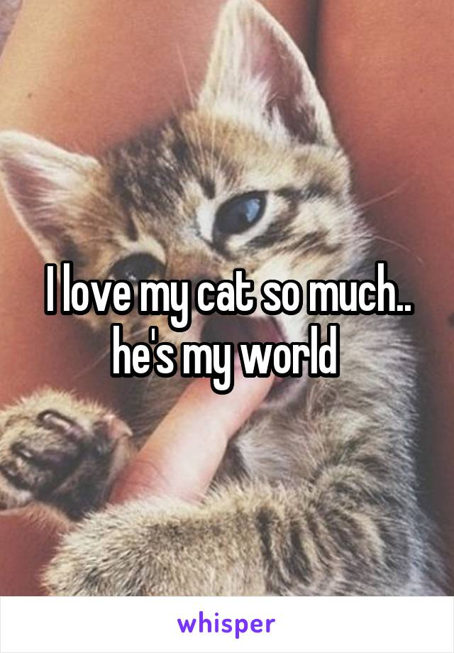 I love my cat so much.. he's my world