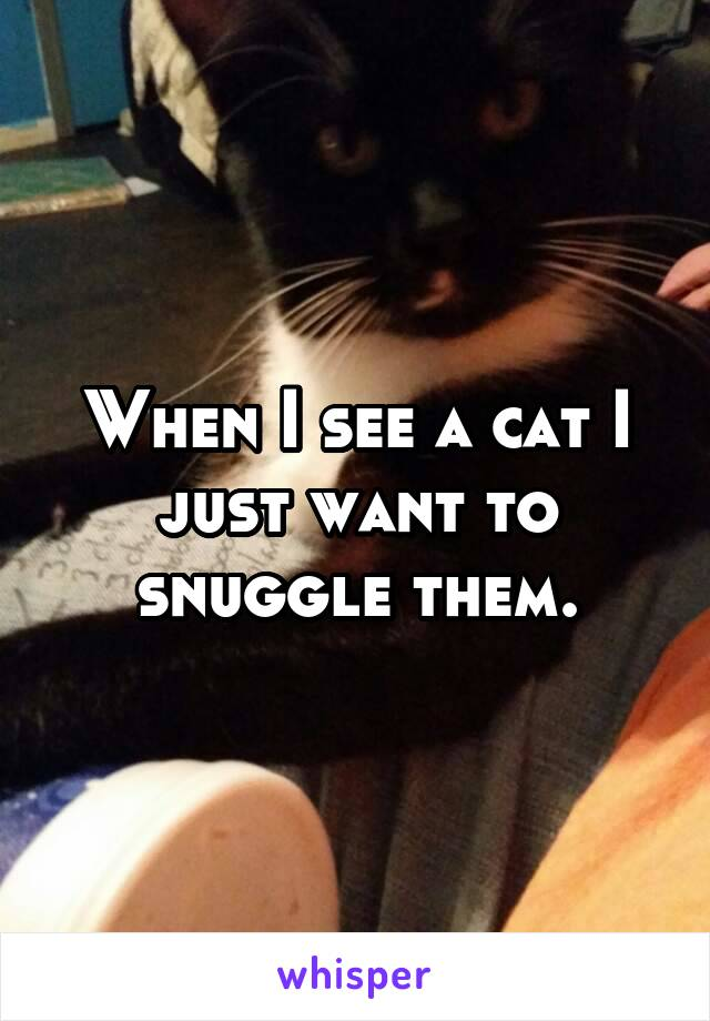When I see a cat I just want to snuggle them.