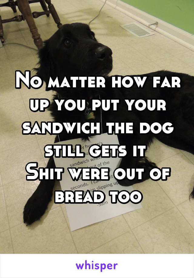 No matter how far up you put your sandwich the dog still gets it  Shit were out of bread too
