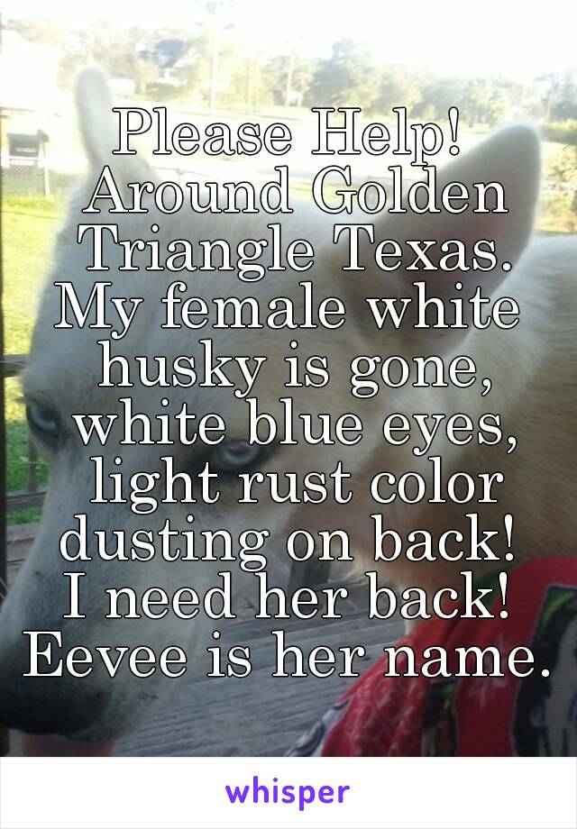 Please Help! Around Golden Triangle Texas. My female white husky is gone, white blue eyes, light rust color dusting on back!  I need her back! Eevee is her name.