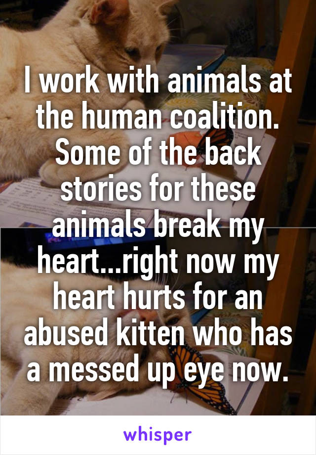 I work with animals at the human coalition. Some of the back stories for these animals break my heart...right now my heart hurts for an abused kitten who has a messed up eye now.