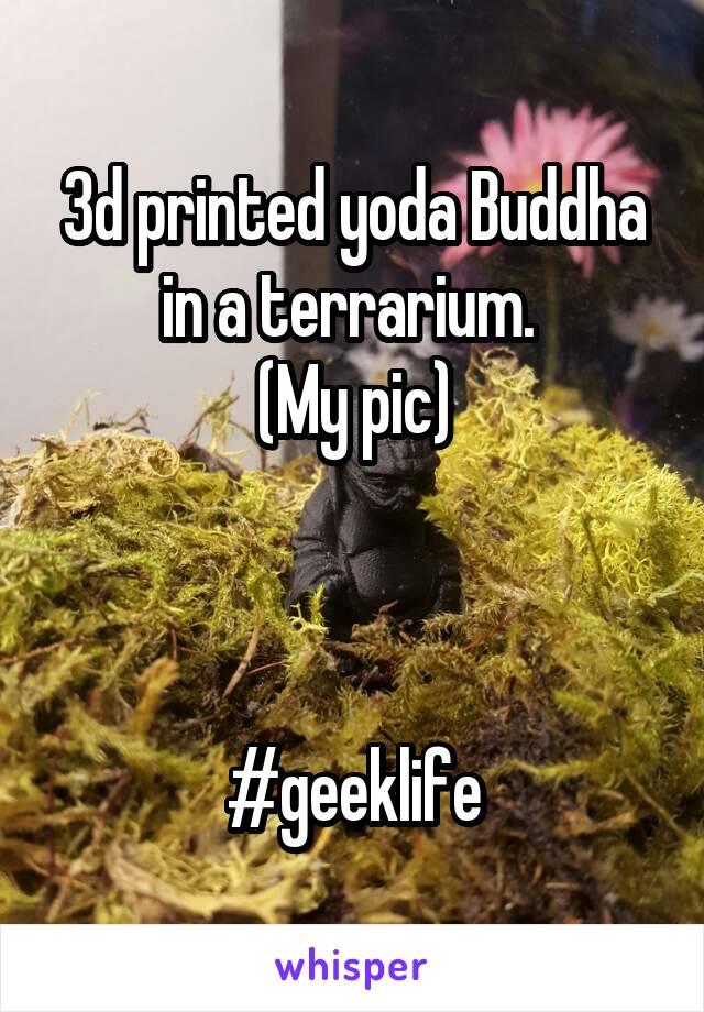 3d printed yoda Buddha in a terrarium.  (My pic)    #geeklife