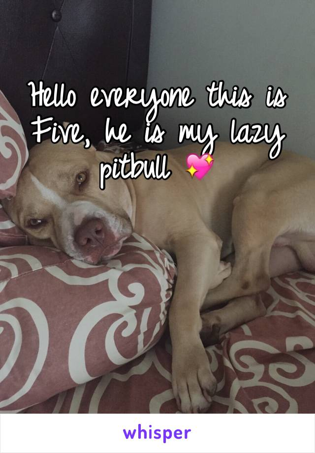 Hello everyone this is Five, he is my lazy pitbull 💖