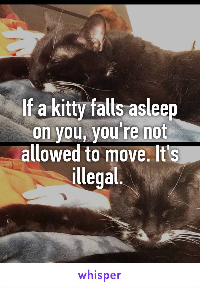 If a kitty falls asleep on you, you're not allowed to move. It's illegal.