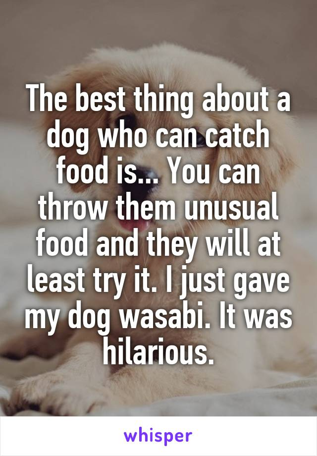 The best thing about a dog who can catch food is... You can throw them unusual food and they will at least try it. I just gave my dog wasabi. It was hilarious.