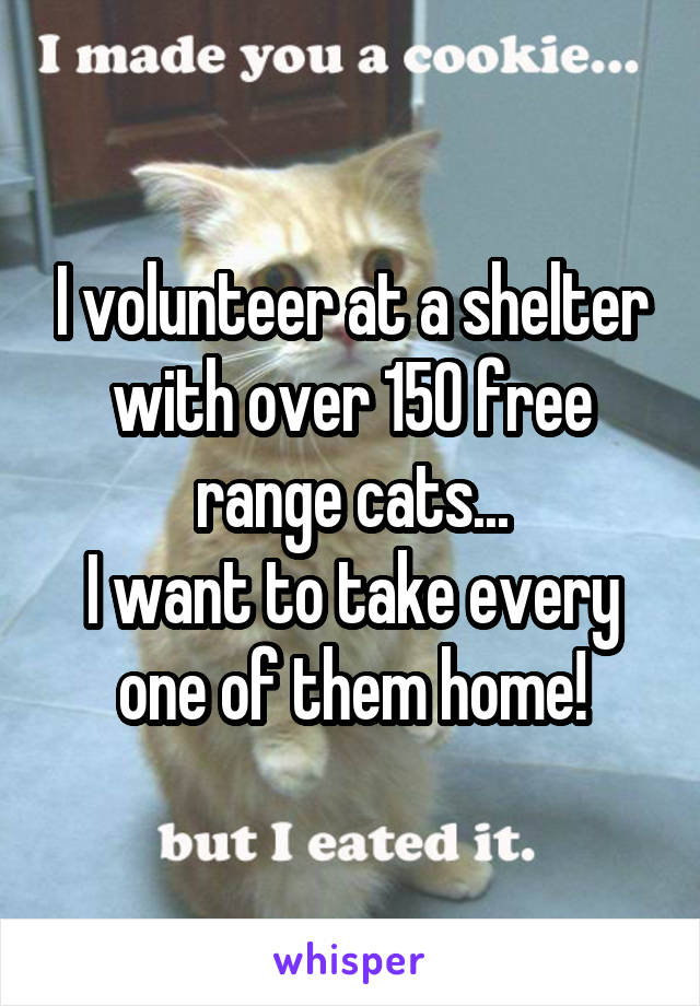 I volunteer at a shelter with over 150 free range cats... I want to take every one of them home!