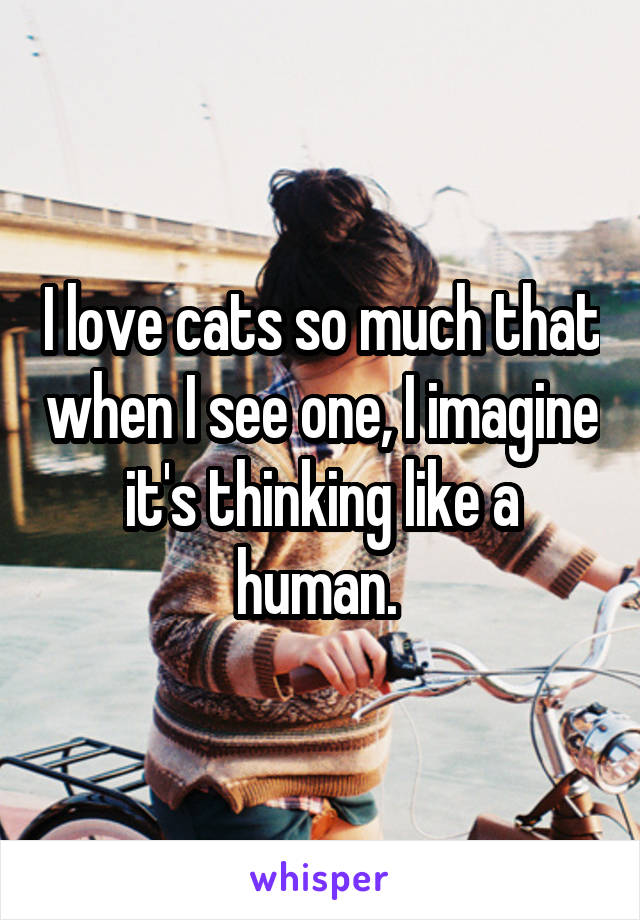 I love cats so much that when I see one, I imagine it's thinking like a human.