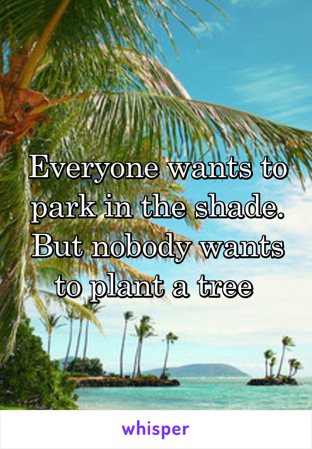Everyone wants to park in the shade. But nobody wants to plant a tree