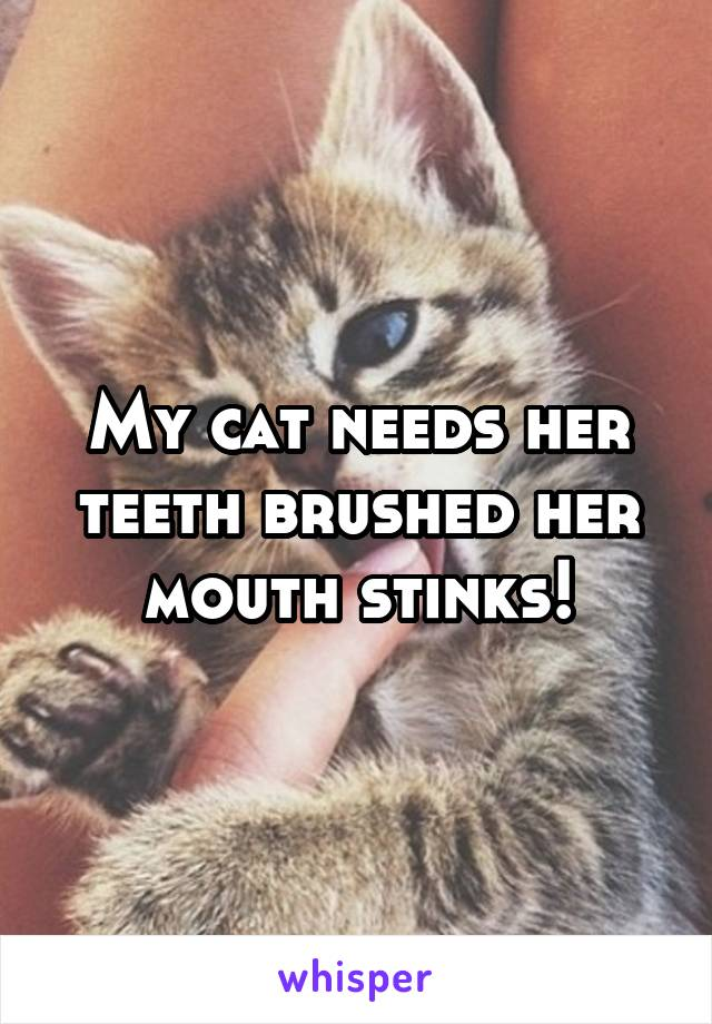 My cat needs her teeth brushed her mouth stinks!