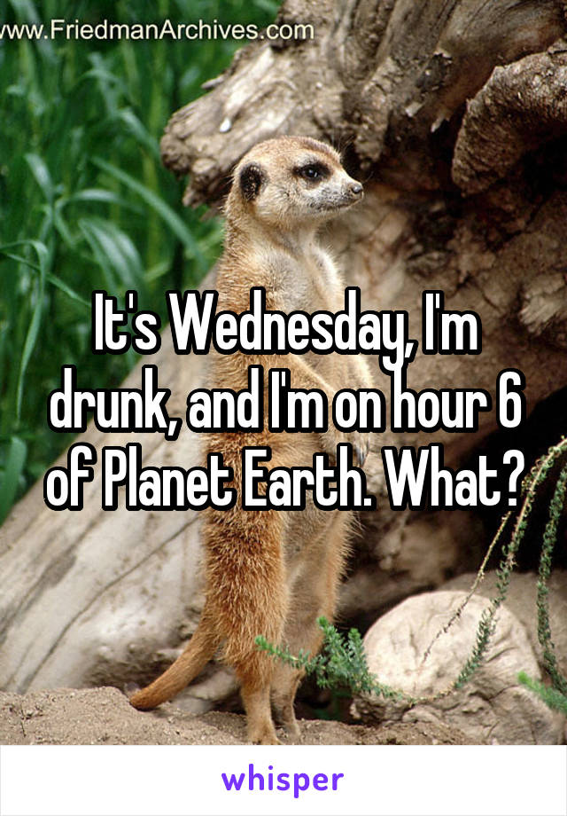 It's Wednesday, I'm drunk, and I'm on hour 6 of Planet Earth. What?
