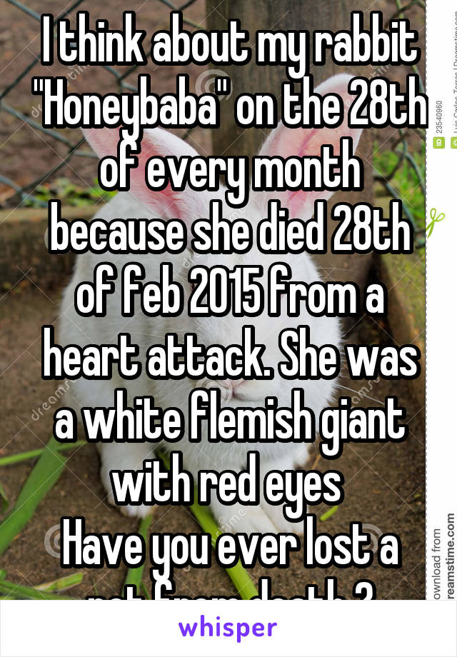 "I think about my rabbit ""Honeybaba"" on the 28th of every month because she died 28th of feb 2015 from a heart attack. She was a white flemish giant with red eyes  Have you ever lost a pet from death ?"