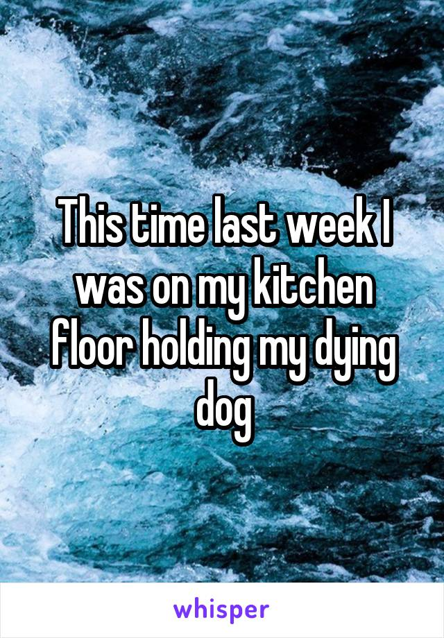 This time last week I was on my kitchen floor holding my dying dog
