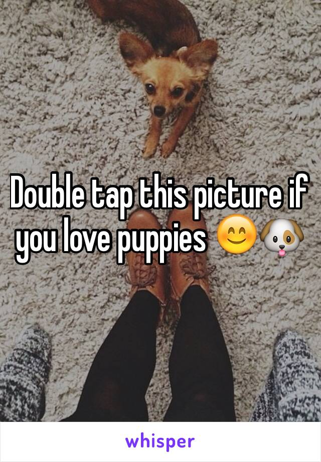 Double tap this picture if you love puppies 😊🐶