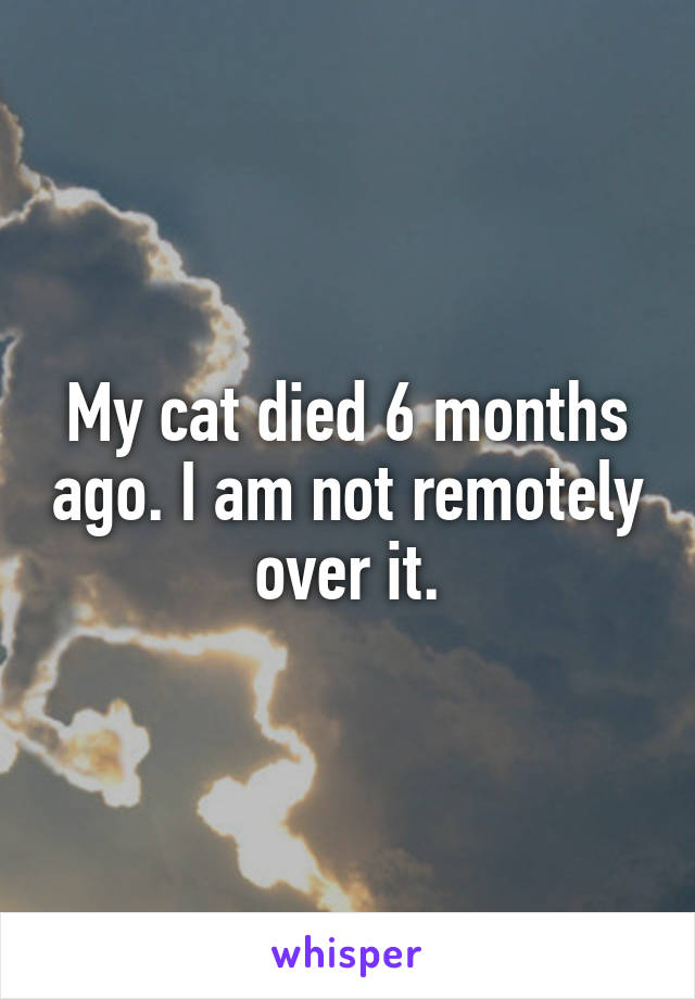 My cat died 6 months ago. I am not remotely over it.