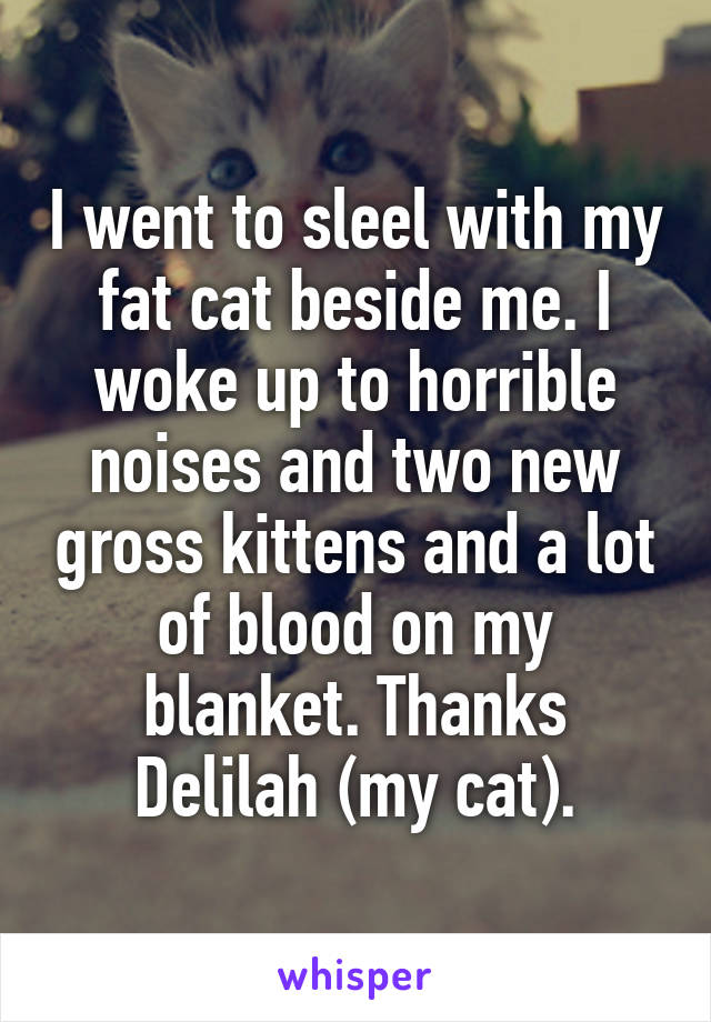 I went to sleel with my fat cat beside me. I woke up to horrible noises and two new gross kittens and a lot of blood on my blanket. Thanks Delilah (my cat).