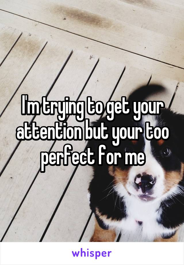 I'm trying to get your attention but your too perfect for me