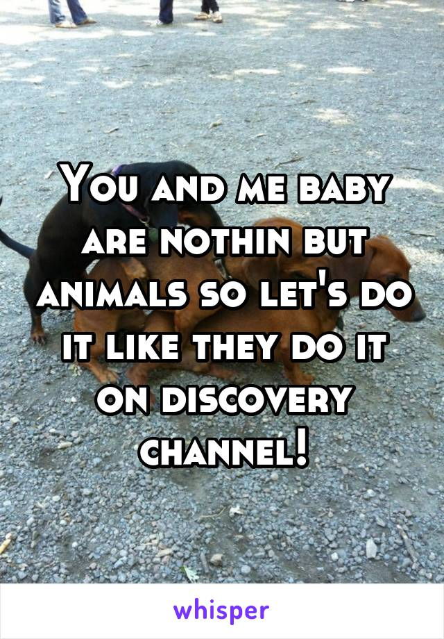 You and me baby are nothin but animals so let's do it like they do it on discovery channel!