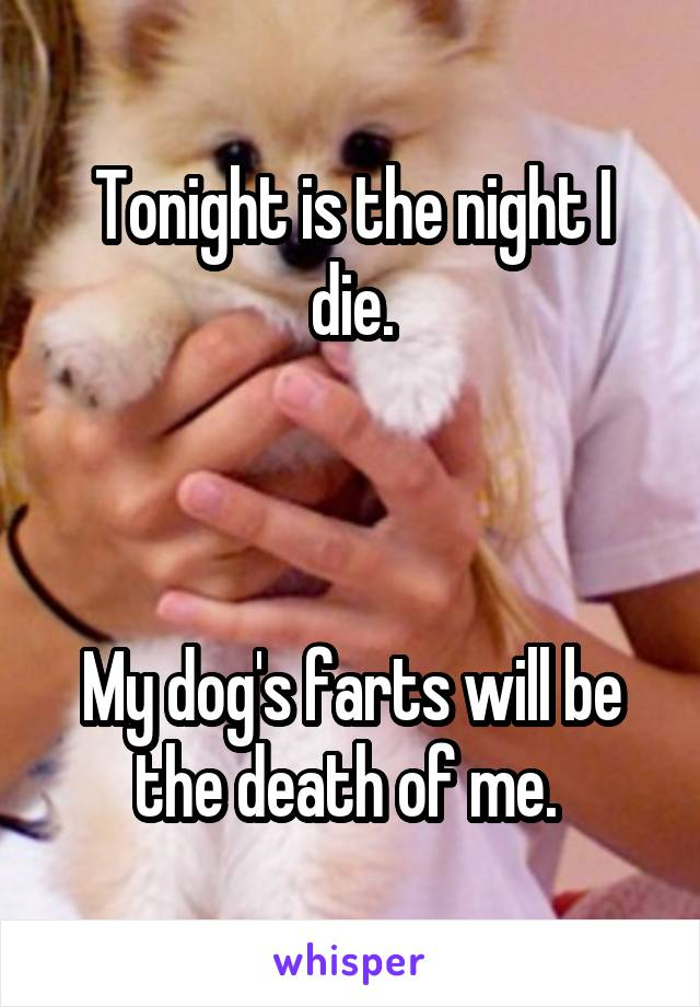 Tonight is the night I die.    My dog's farts will be the death of me.