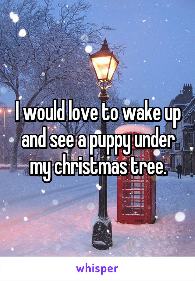 I would love to wake up and see a puppy under my christmas tree.