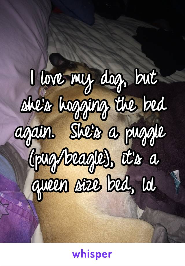 I love my dog, but she's hogging the bed again.  She's a puggle  (pug/beagle), it's a queen size bed, lol