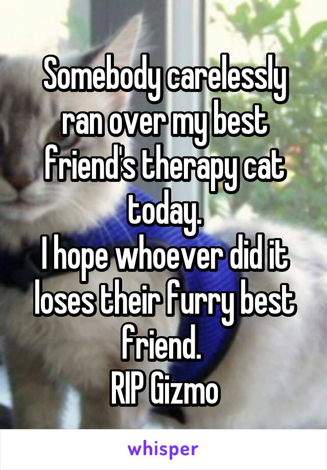 Somebody carelessly ran over my best friend's therapy cat today. I hope whoever did it loses their furry best friend.  RIP Gizmo