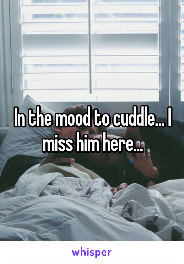 In the mood to cuddle... I miss him here...