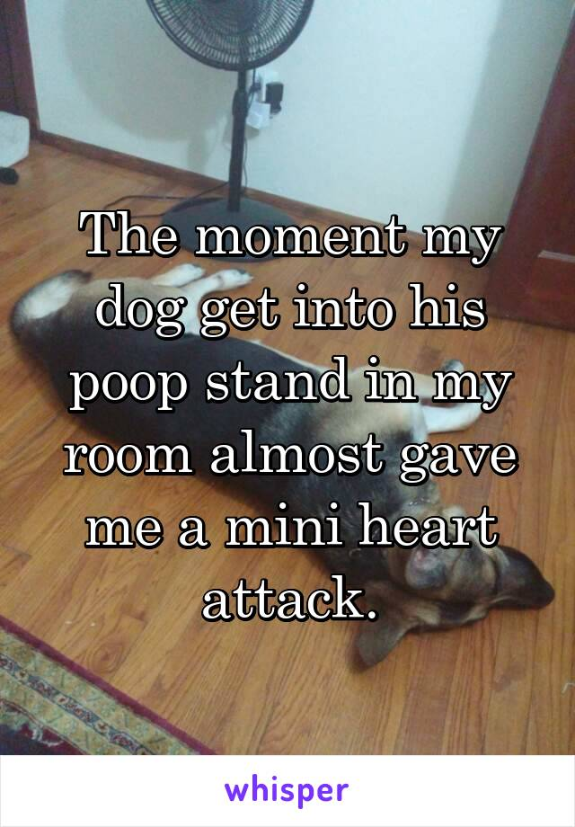 The moment my dog get into his poop stand in my room almost gave me a mini heart attack.
