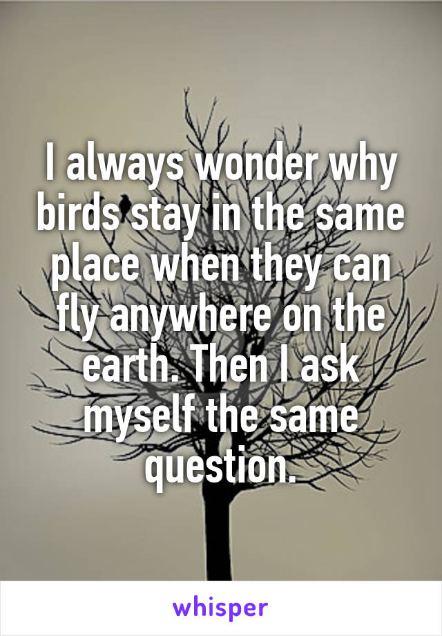 I always wonder why birds stay in the same place when they can fly anywhere on the earth. Then I ask myself the same question.
