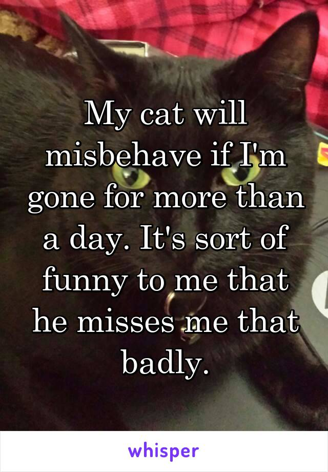 My cat will misbehave if I'm gone for more than a day. It's sort of funny to me that he misses me that badly.