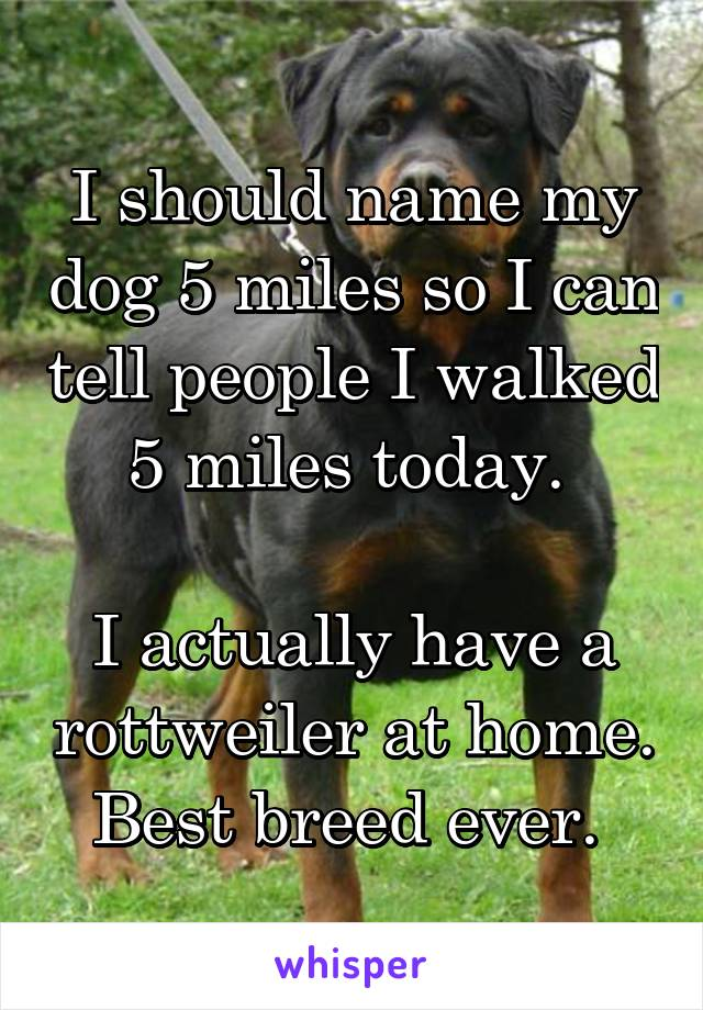 I should name my dog 5 miles so I can tell people I walked 5 miles today.   I actually have a rottweiler at home. Best breed ever.