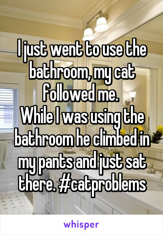 I just went to use the bathroom, my cat followed me.  While I was using the bathroom he climbed in my pants and just sat there. #catproblems