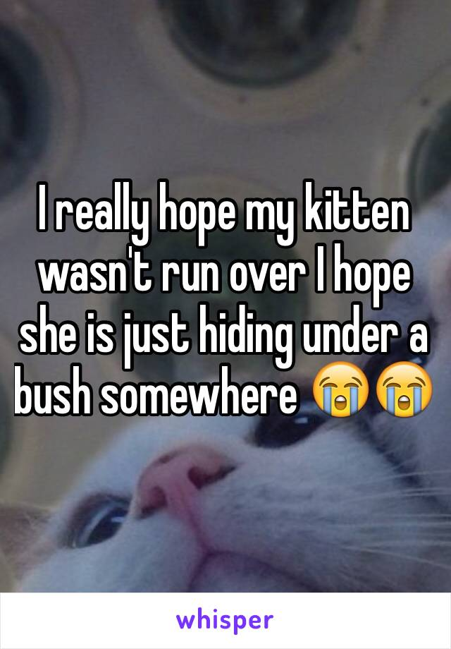 I really hope my kitten wasn't run over I hope she is just hiding under a bush somewhere 😭😭