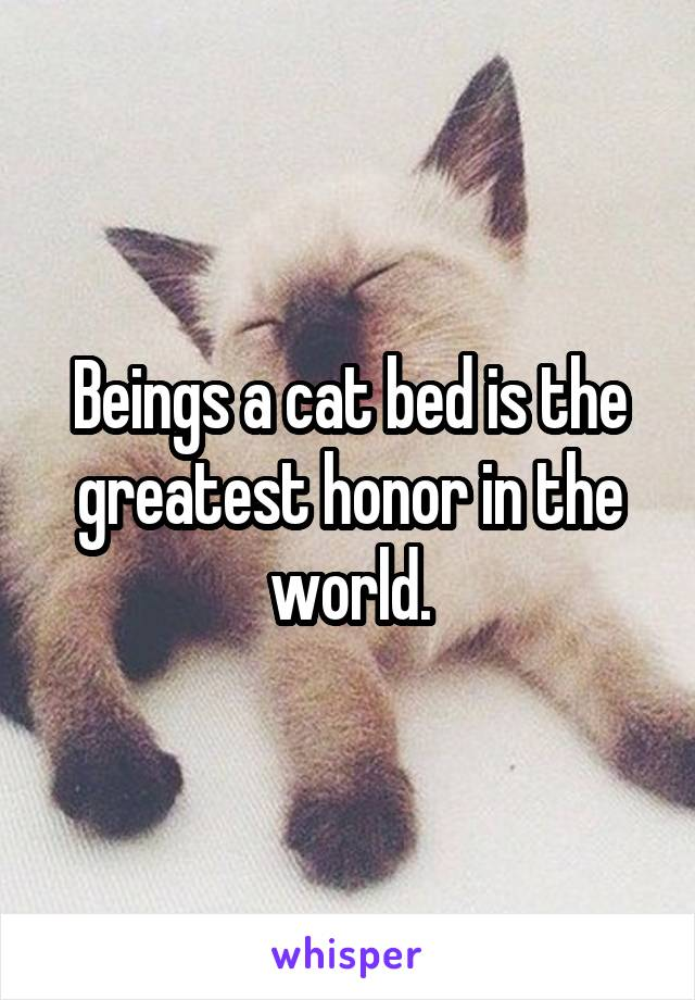 Beings a cat bed is the greatest honor in the world.
