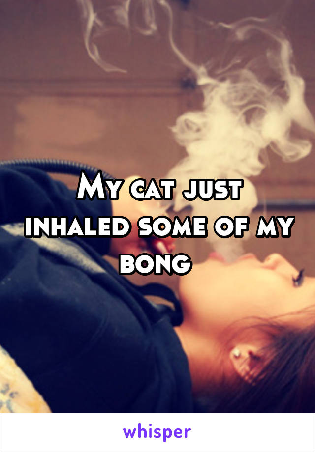 My cat just inhaled some of my bong