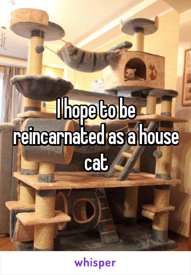 I hope to be reincarnated as a house cat